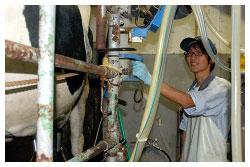 酪農に生きる増田さん