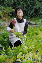 つるやの天ぷら用に栽培するツルムラサキの畑で