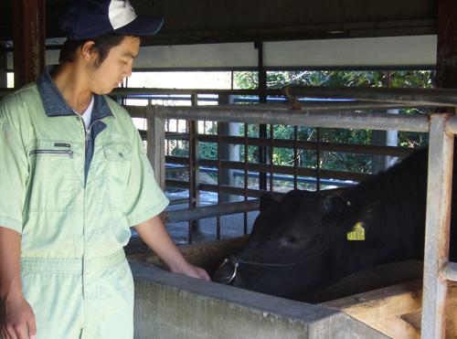 口蹄疫終息後、学校に戻った牛と(宮崎県立高鍋農業高校提供)