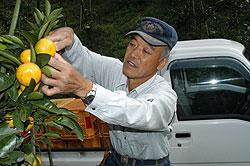 親父(おやじ)は仕掛人 近藤敏晴さん(65)=香川県三豊市