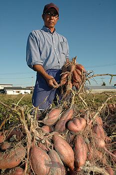 ゼロから始めた私の農業経営(生活全てが農業) 鈴木郁馬さん(43)=高知県南国市
