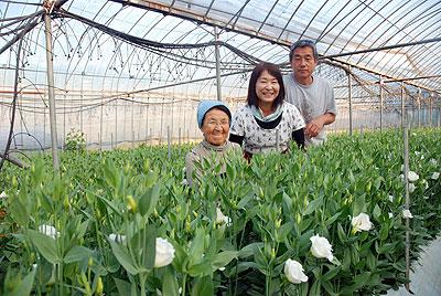 トルコギキョウの土耕栽培