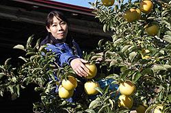 りんごと共に、私の生き方 高野寛子(32)=岩手県奥州市