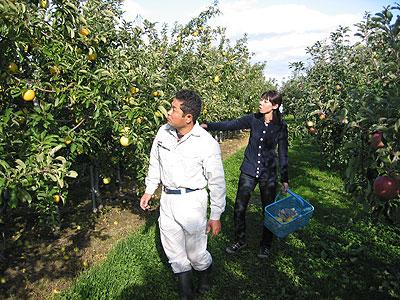 りんごを収穫する高野寛子さん