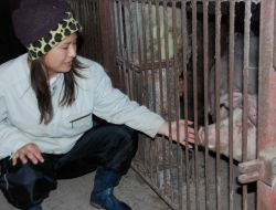 えびの市の実家で、飼育する豚と