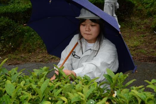 梅ケ島茶で地域の活性化~私のお茶作りの夢~ 秋山真早美さん(18)=静岡・静岡農業3年
