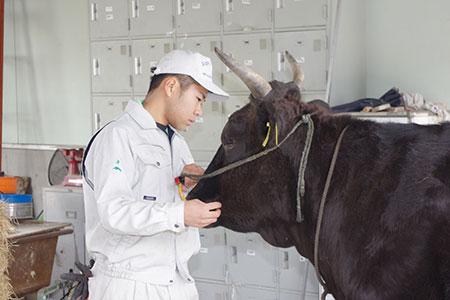 一頭に注ぐ(新規就農を目指して) 渡邊 賢也さん(18)=宮城県小牛田農林高校3年
