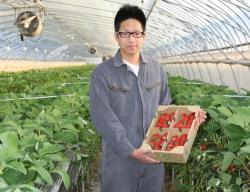 イチゴとともに歩む私の農業経営 田中智也さん=北海道・岩見沢農3年