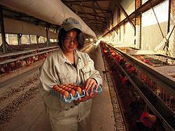 香川県のブランド肉を全国へ! 谷沢瑞希さん(18)=香川・農業経営3年
