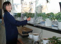 神奈川県立中央農業高でもシクラメンの実験が続く
