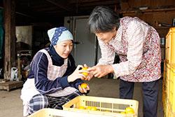 私が農業後継者になる! 小川 未来さん(16)=長崎・諫早農業高校2年