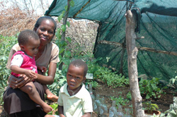 南アフリカのプロジェクトでできた菜園(JVC提供)