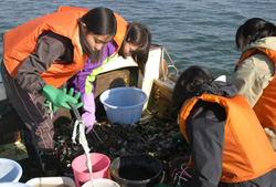 戸内海で海底ごみを回収する山陽女子中学・高校地歴部の部員たち=井上貴司教諭提供