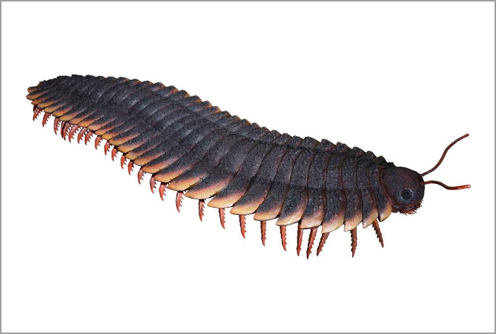 約2.3メートルの巨大ヤスデ「アースロプレウラ」(実物大模型)